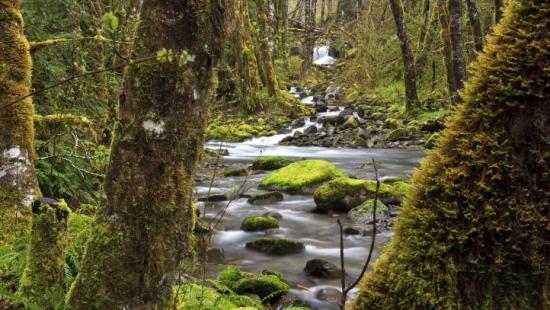 """,,Lasy dla żywności – żywność dla lasu"""". 21 marca Międzynarodowym Dniem Lasów (FILM)"""