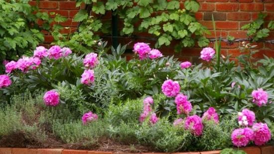 Pochwal się swoim ogrodem. Weź udział w konkursie