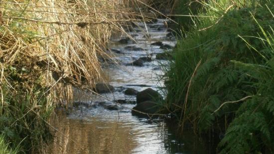 GMINA BRZOZÓW: Problem z nielegalnym opróżnianiem zbiorników bezodpływowych