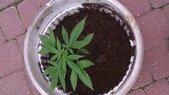 Amfetamina w samochodzie, marihuana na oknie