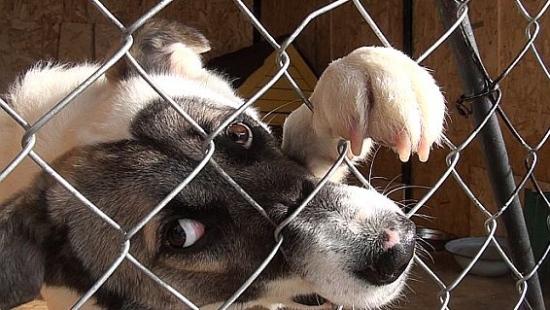 Przepełniony sanocki Ośrodek Adopcyjny dla Zwierząt (FILM)