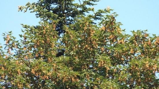 Tegoroczna jesień wyjątkowo urodzajna w podkarpackich lasach (ZDJĘCIA)