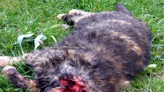 """Bestialsko zamordowana kotka przy ul. Paderewskiego? """"Stała się manifestacją poglądów chorej osoby z przerośniętym i zwyrodniałym ego"""""""