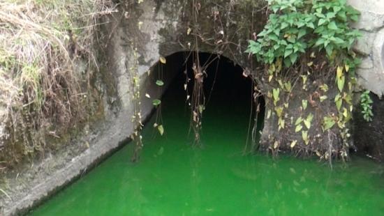 Zielona woda w sanockim potoku! SPGK uspokaja (FILM)