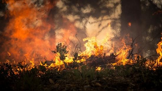 KRONIKA STRAŻACKA: Pożary, połamane drzewa, wypadki drogowe