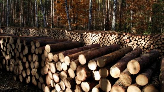 Jeden kradł, drugi sprzedawał drewno