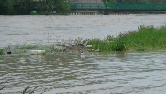 Ogłoszono alarm przeciwpowodziowy w gminie Zarszyn