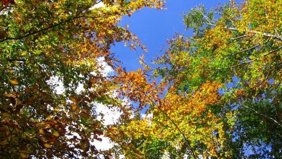 Magiczna jesień z Waszej perspektywy (ZDJĘCIA)