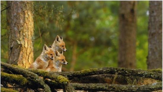 """Coś dla miłośników lasu. Siedemnasta edycja """"Leśnych fotografii"""""""