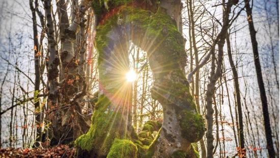 Przyroda w obiektywie. Rusza konkurs Leśne Fotografie (ZDJĘCIA)
