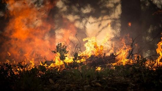 Paląc trawę wznieciła pożar. Ogień strawił niemal hektar nieużytków rolnych