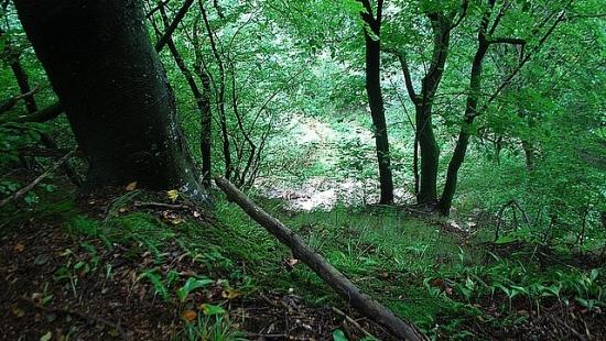 Mężczyzna kradł drzewo z lasu, grozi mu 5 lat więzienia