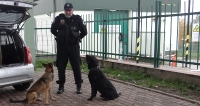 Funkcjonariusze Służby Celno-Skarbowej (KAS) zatrzymali na przejściu granicznym w Korczowej 48 kg tytoniu